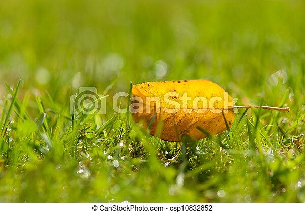 automne, solitaire, feuille, jaune - csp10832852