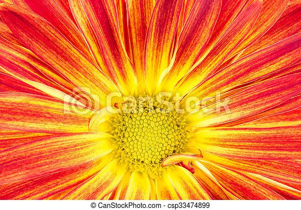 automne, vagabond, couler, jaune, orange - csp33474899