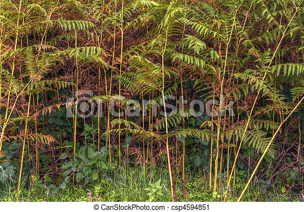 Auttumn forest scene detailing changing life cycle of ferns  - csp4594851