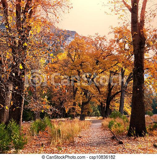 Autumn alley - csp10836182