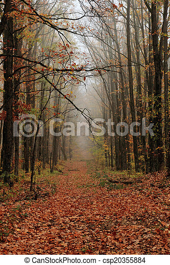 autumn alley - csp20355884