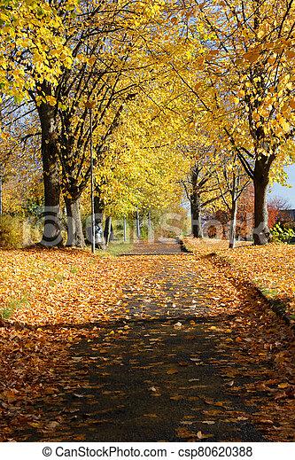 Autumn alley - csp80620388