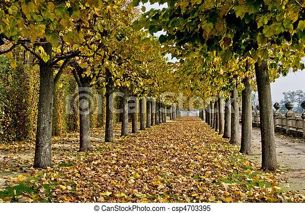 autumn alley - csp4703395