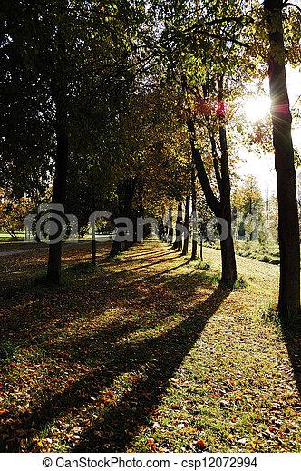Autumn alley - csp12072994