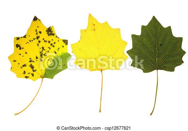 Autumn aspen leaves - csp12677621