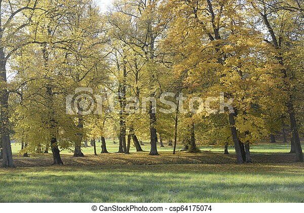 Autumn at backyard and garden. Nature background with colorful trees at sunny day - csp64175074
