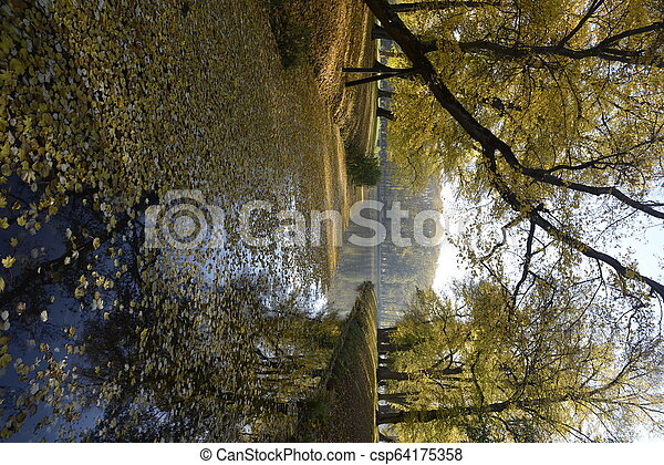 Autumn at backyard and garden. Nature background with colorful trees at sunny day - csp64175358