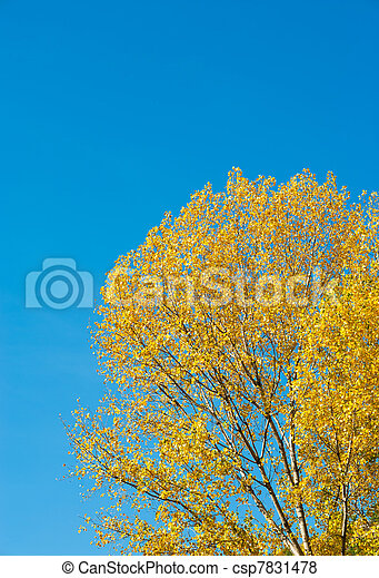 Autumn backdrop - csp7831478