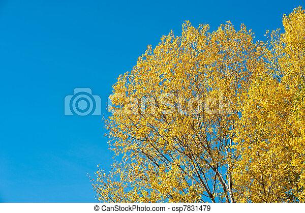 Autumn backdrop - csp7831479