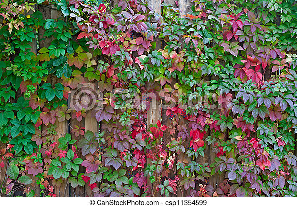 Autumn background, colorful leafs - csp11354599