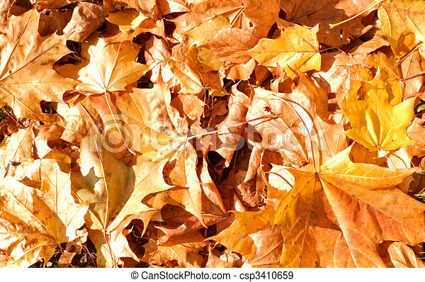 Autumn background - csp3410659