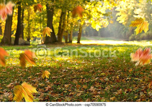 Autumn background. Landscape in the park. - csp70590975