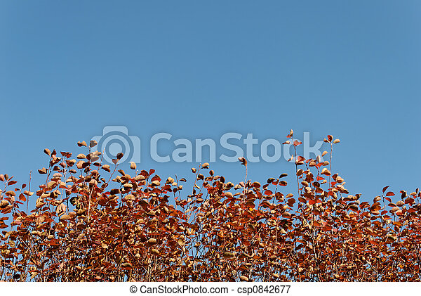 Autumn Background - csp0842677