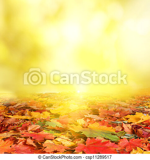 autumn background  - csp11289517