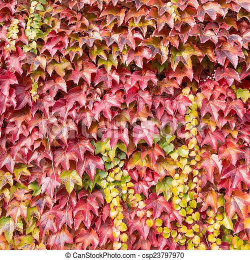 autumn background - csp23797970