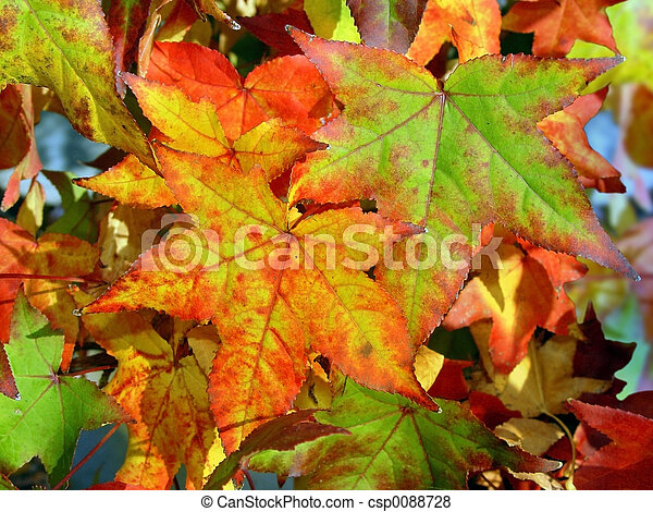 Autumn background - csp0088728