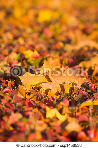 Autumn background - csp1458538