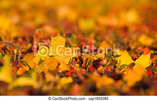 Autumn background - csp1655085