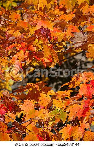 Autumn Background - csp2483144