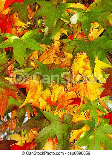 Autumn background - csp0090659
