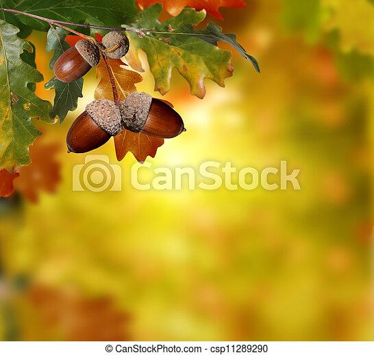 autumn background  - csp11289290
