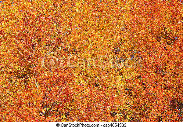 Autumn background - csp4654333