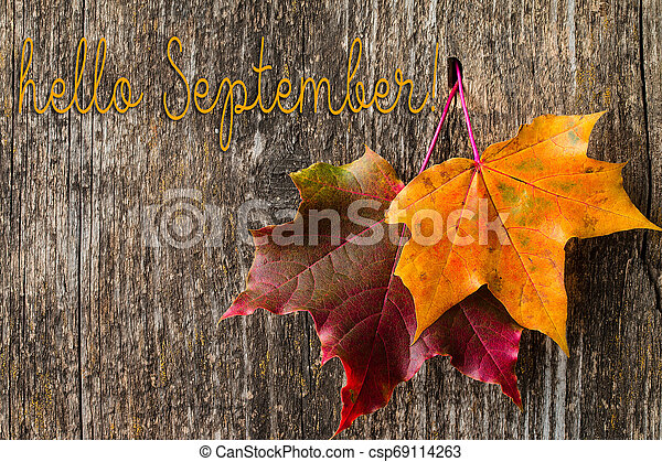 Autumn background with HELLO SEPTEMBER letters and autumn leaves. - csp69114263
