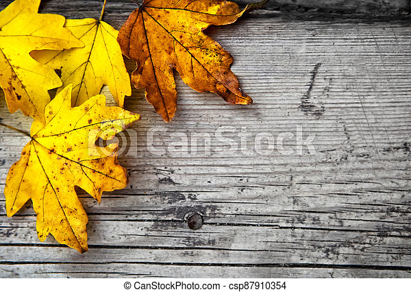 Autumn background with maple leaves - csp87910354