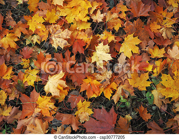 autumn background with maple leaves - csp30777205
