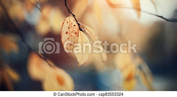 Autumn background with yellow leaves on branches. - csp83553324