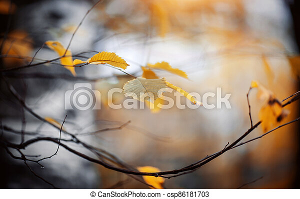Autumn background with yellow leaves on branches. - csp86181703
