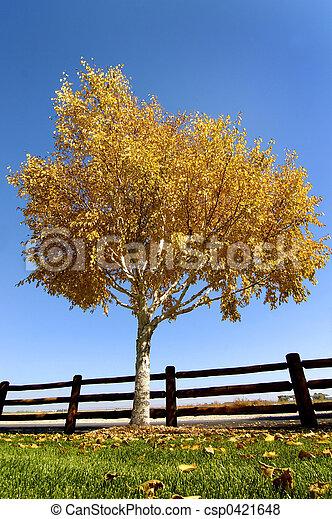 Autumn birch tree - csp0421648