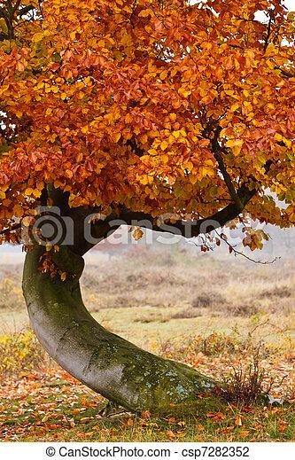 Autumn birch tree - csp7282352