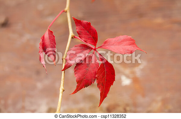 Autumn branch with red leaves on brown background - csp11328352