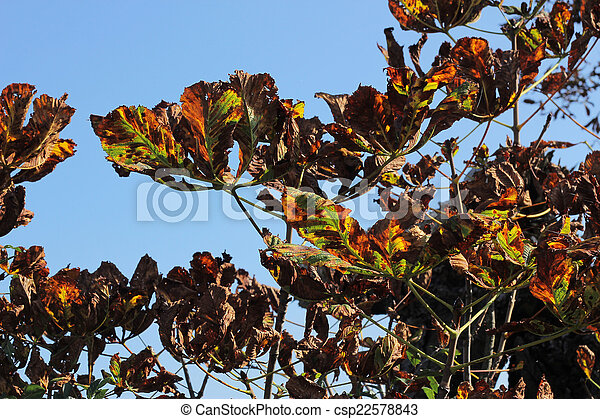 Autumn colored leaves of the tree - csp22578843