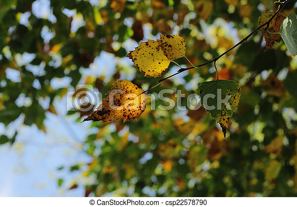 Autumn colored leaves of the tree - csp22578790