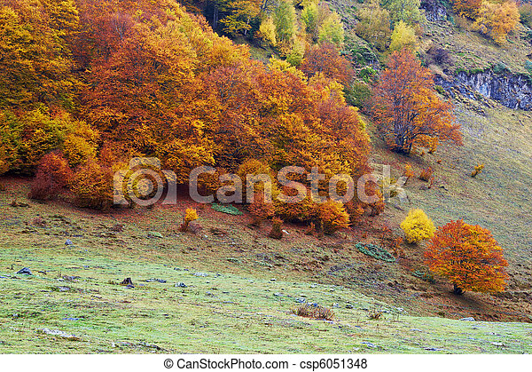 Autumn colors in the forest - csp6051348