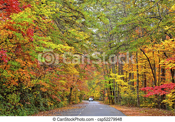 Autumn Colors on a Road - csp52279948