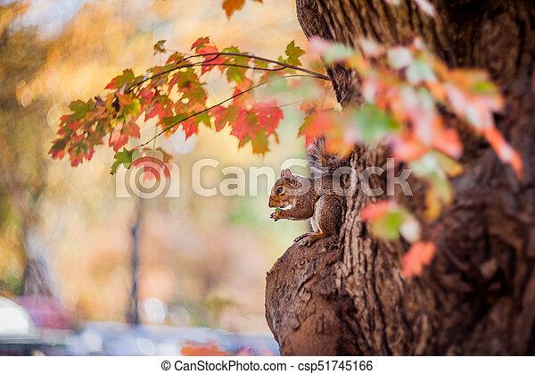 Autumn colors - csp51745166