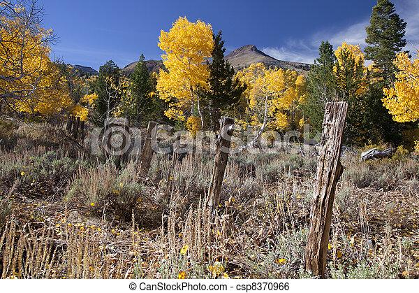 Autumn Colors - csp8370966