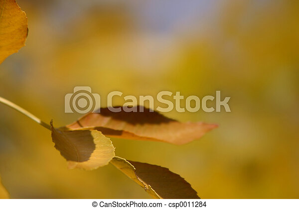 Autumn Colors - csp0011284