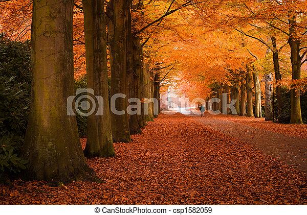 autumn colors - csp1582059