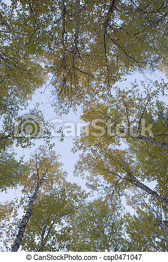 Autumn colors under the sky - csp0471047