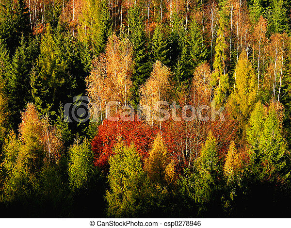 autumn colourful forest - csp0278946