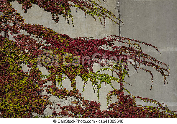 autumn colours leaves on a wall - csp41803648