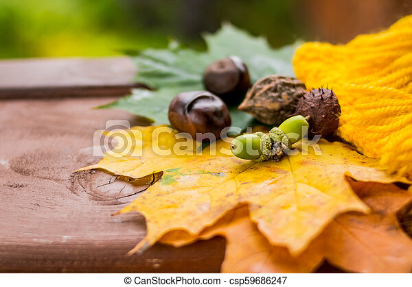 Autumn composition. Autumn background with colored leaves, pumpkin, chestnuts and acorns on wooden boards. Thanksgiving Day. Top view, flat lay - csp59686247