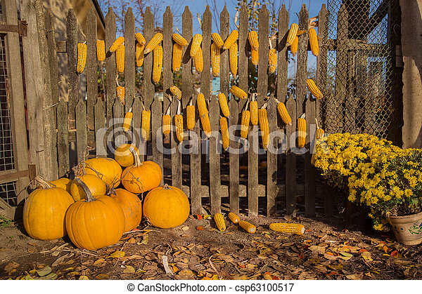 Autumn composition with chrysanthemum flowers, pumpkins, apples in a wicker basket, ceramic pots, outdoors. - csp63100517