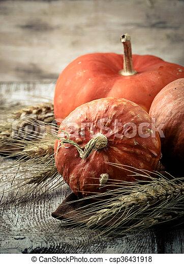 Autumn composition with pumpkin - csp36431918