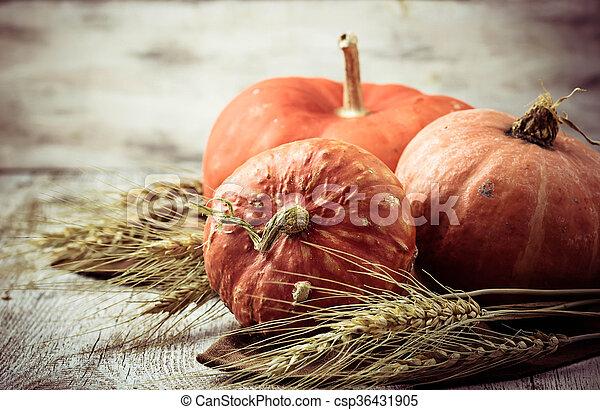 Autumn composition with pumpkin - csp36431905