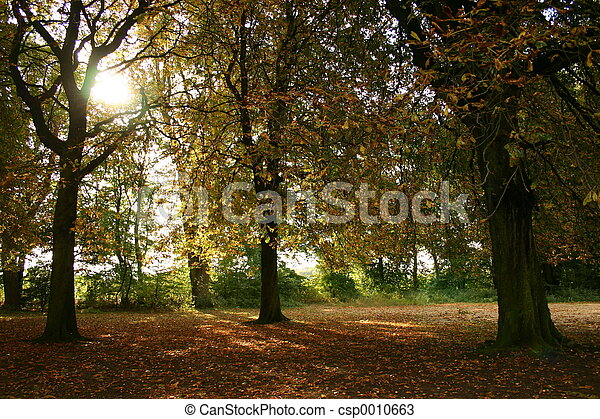 Autumn Day I - csp0010663